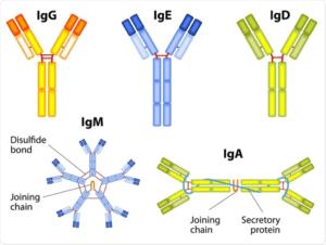 Immunoglobuline umane